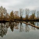Reflexos De Inverno