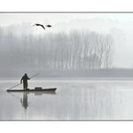 O Barqueiro E As Gaivinas