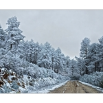 Florestas  De  Gelo