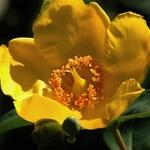 Uma Flor......