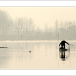 O Barqueiro E A Pateira