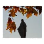 Manto De Outono