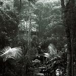 Oca No Seio Da Floresta