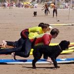 Cão Surfista!