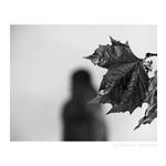 Outono Oculto