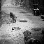 Momentos Caninos
