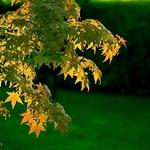 Outono Que Passou