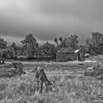 Ruralidades