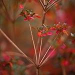 Outono em tons vermelhos