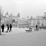 Uma manhã de nevoeiro e geada