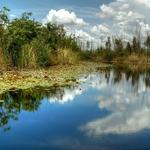 Reflexos tropicais