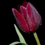 Flor para ti....