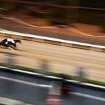 Um dia nas corridas