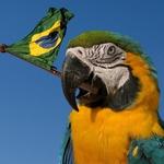 Eu te amo, meu Brasil