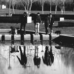 Reflexos no lago___