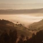 manto de nevoeiro___