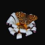 Butterfly!!!!!