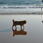 Reflexos à beira-mar