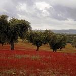 Terra de vermelho