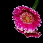 Flor.....
