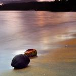 Coconuts Island