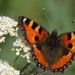 Butterfly_______