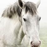 Cavalo branco.