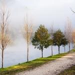 Velvet fog