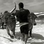 tourear o mar - Arte Xávega praia da Vagueira