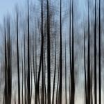 Miragem de uma Floresta