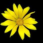 Flor de jardim......