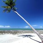 Praia dos Carneiros, PE.
