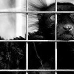 Prisioneiro sem culpa___