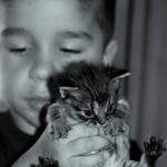 O meu gatinho___