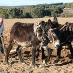 Agricultor Transmontano...