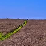Caminhar nos campos alentejanos_