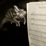 camaleón musical