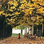 """""""Outono no parque"""""""