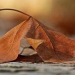 """""""Pormenor de Outono"""""""