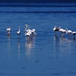 Flamingos no Tejo.
