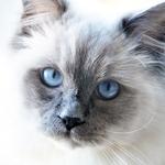 Olhar Azul