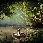 Lago e patos