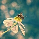 ☼ Honey Bee ☼