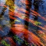 O fundo do ribeiro