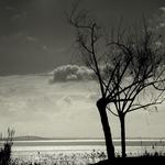 A árvore e a paisagem!