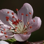 feeling Spring___