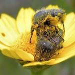 Em leito de polen
