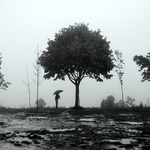 A árvore protectora___