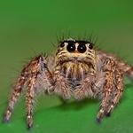 spider __