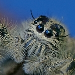 the spider_
